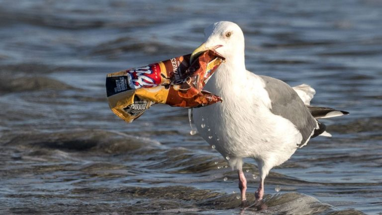 seagul-plastic-crisp-packet-pollution