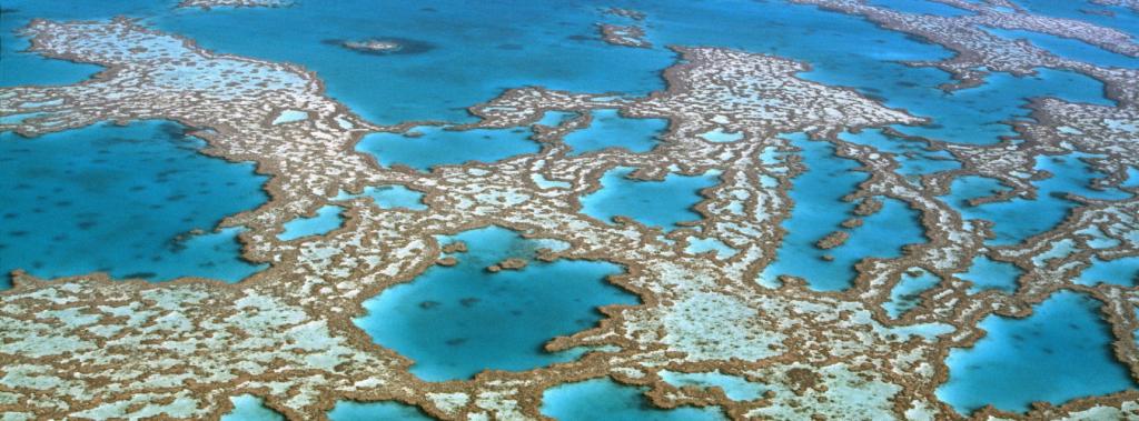 coral-reef-blue-economy-ecopurple